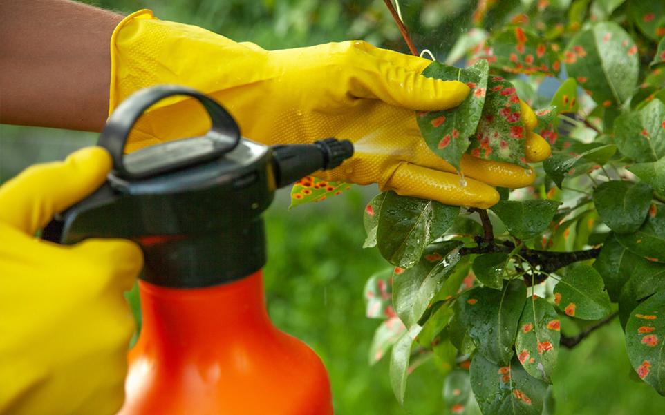 importancia fungicidas