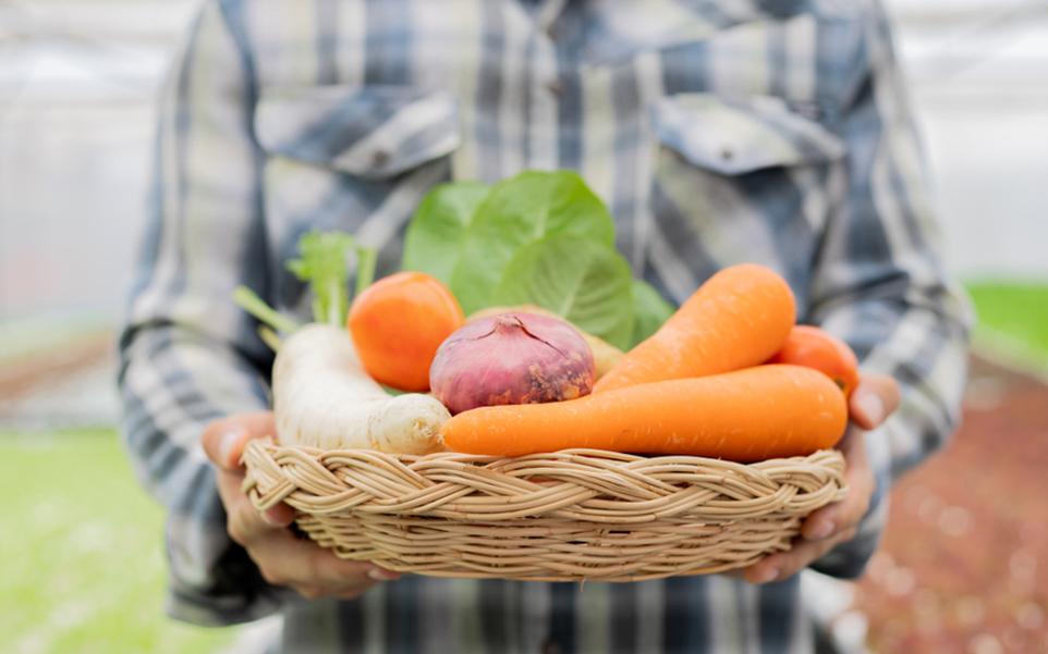 como proteger los alimentos