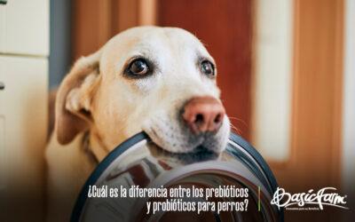 ¿Cuál es la diferencia entre los prebióticos y probióticos para perros?