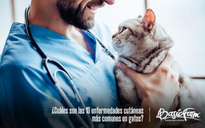 ¿Cuáles son las 10 enfermedades cutáneas más comunes en gatos?