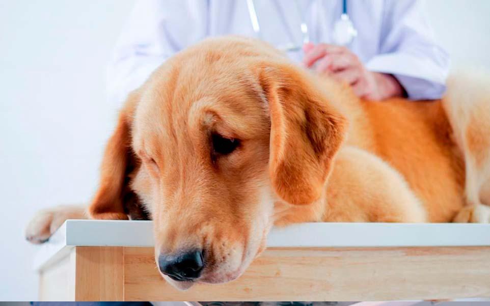 causas infeccion ecoli mascotas