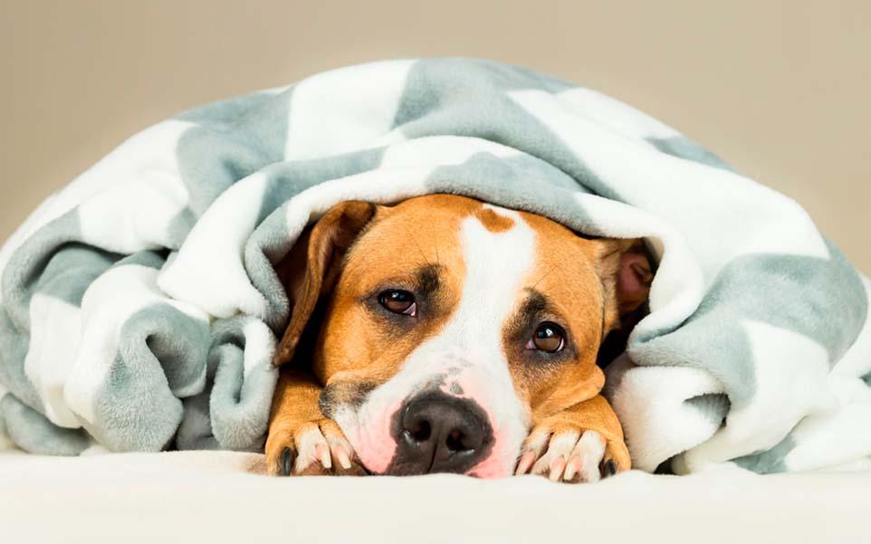 sintomasenfermedades hepaticas perros