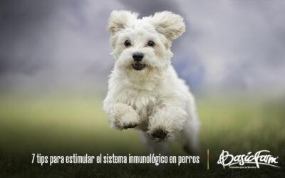 7 tips para estimular el sistema inmunológico en perros