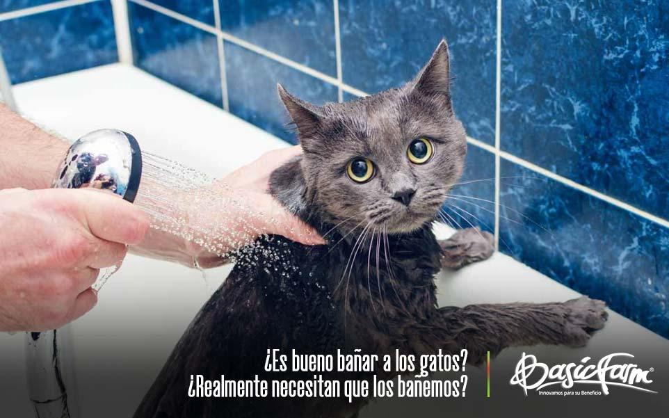 gato en la ducha