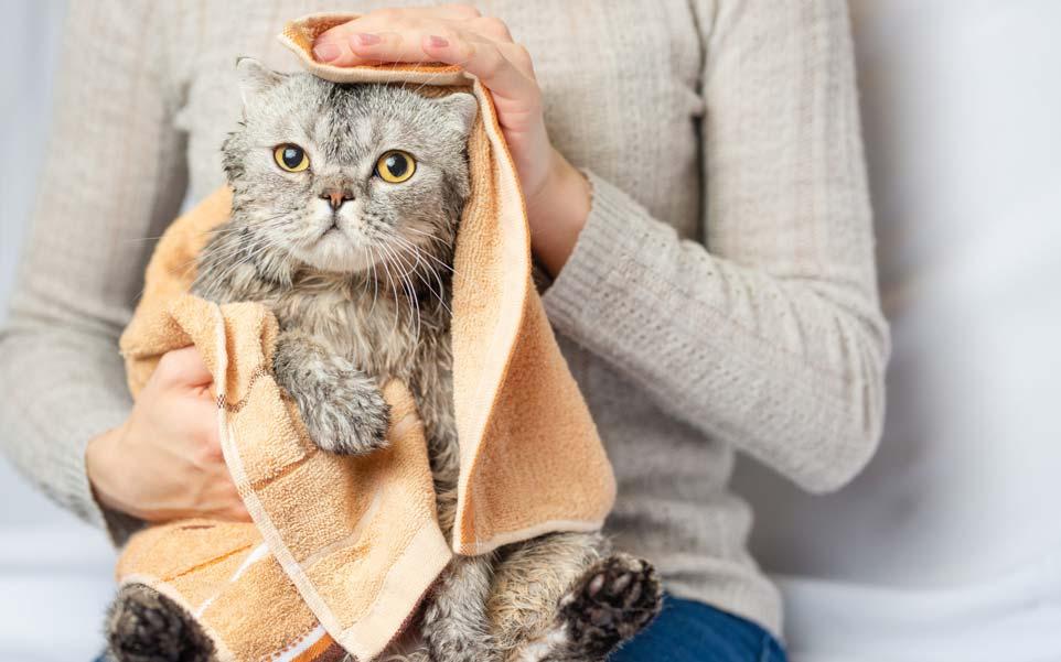 gato y una toalla