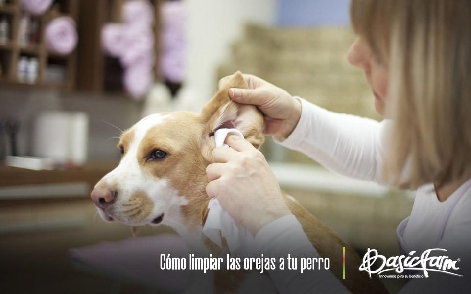Cómo limpiar las orejas a tu perro