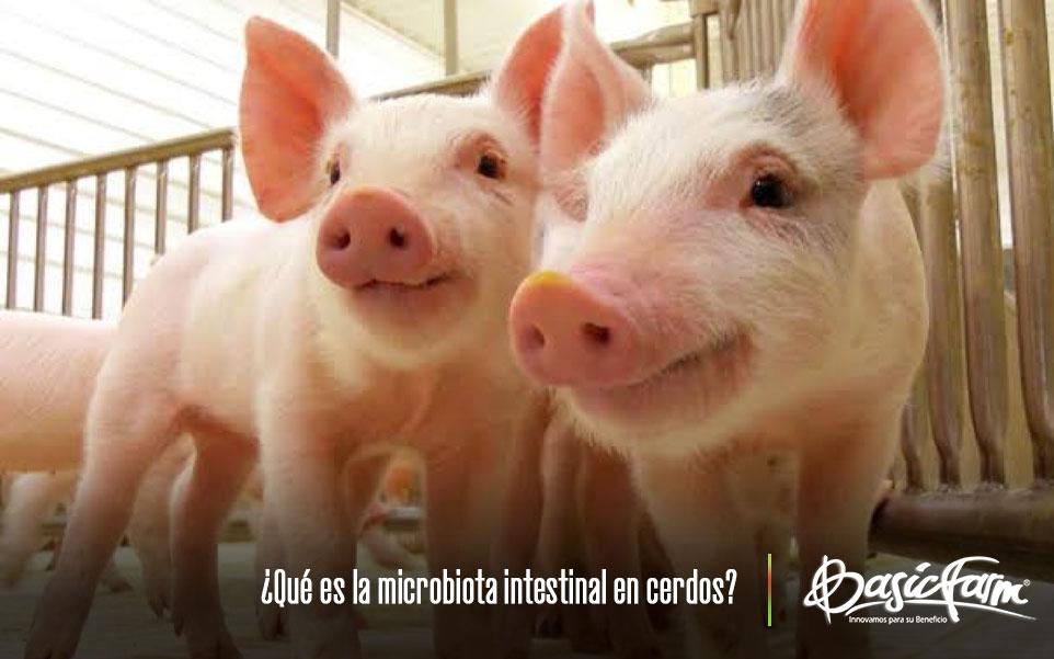 ¿Qué es la microbiota intestinal en cerdos?