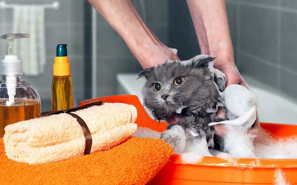 gato en una tina