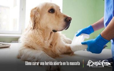 Cómo curar una herida abierta en las mascotas