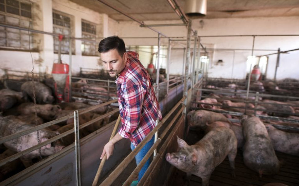hombre en una granja