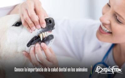 Conoce la importancia de la salud oral en los animales