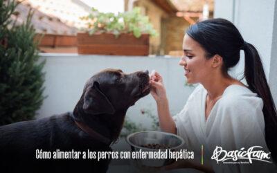 Cómo alimentar a los perros con enfermedad hepática