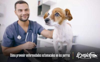 Cómo prevenir trastornos gastrointestinales en los perros