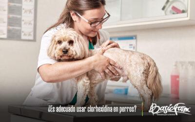 ¿Es adecuado usar clorhexidina en perros?