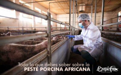 Todo lo que debes saber sobre la Peste Porcina Africana