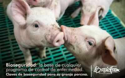 Claves de bioseguridad para su granja porcina. Bioseguridad: la base de cualquier programa de control de enfermedad.