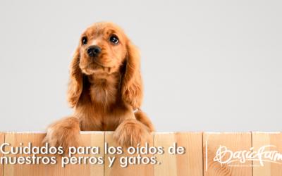 Cuidados para los oídos de nuestros perros y gatos.